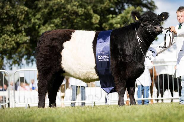 Breed Champion Clifton Absolutely Fabulous