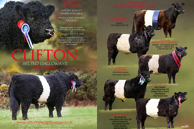 Clifton Belted Galloways - Home of Champions